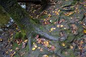 Roots Go Deep / A tree planted by the Water--See Psalm #1