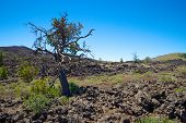 Lava Fields In Craters Of The Moon