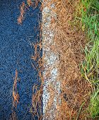 Conifer Needles On Asphalt Road, Abstract Background.