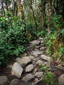 Mount Kinabalu Trail, Sabah, Malaysia