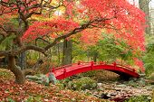 Scenic autumn picture of Japanese Garden with red bridge