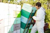 Male beekeeper loading stacked honeycomb crates in truck