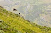 California Landscape With Vultures