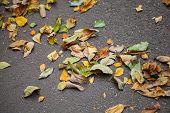 Fallen Colorful Autumnal Leaves On Urban Asphalt Road
