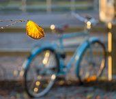 Yellow Autumn Leaf And Bike
