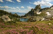 Flowering Lupine Meadows And Amphitheatre Lake, Grand Tetons