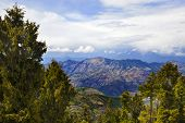 foto of himachal pradesh  - Trees with mountain range in the background - JPG