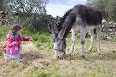 image of jackass  - Two years and a half old toddler feeding a grey donkey - JPG