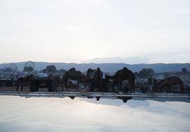 foto of camel-cart  - Scene at Pushkar Camel Fair in the early morning - JPG