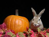 Autumn Rabbit