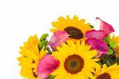 stock photo of calla  - sunflowers - JPG