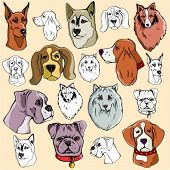 Vector illustrations of dog heads in color, and black and white renderings.