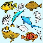 A set of 6 vector illustrations of fishes in color, and black and white renderings.