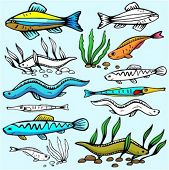 A set of 6 vector illustrations of eels, congers and exotic fishes.