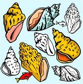 A set of 4 vector illustrations of sea-shells in color, and black and white renderings.