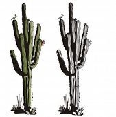 image of tipi  - Illustration of a cactus - JPG