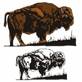 Vector illustration of a bison.