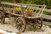 Flowers Pots On Waggon