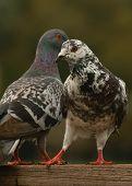 Birds At Park