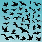 squall of birds