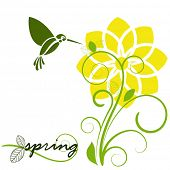daffodil in spring with humming bird