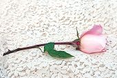 Single Pink Rose On Lace