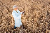 Scientist doing field test of new GMO grain for better yield, shot from above poster