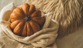Big Orange Pumpkin On Warm Sweater. Pumpkin In The Soft Pullover. Thanksgiving Background - Orange P poster