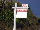stock photo of saw-palmetto  - View of vacant lot with reduced sale sign - JPG