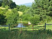 Gated Pond Landscape
