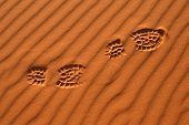 stock photo of saharan  - Human footsteps in the sand in the Sahara Desert - JPG