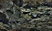 Seaweed On The Rocks