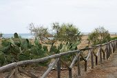 Wooden Fence, Rhythm, Yellow Sand, Green Bushes, Sea, Landscape, Rural, Exotic, Nature poster