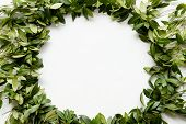 Periwinkle Leaves Wreath On White Background. Green Foliage Circle. Floristry Botany And Natural Dec poster