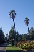 California Capitol Building And Palm Trees poster