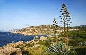 Beautiful Sardinian sea landscape with rocks of Isola Rossa an blooming agave plat