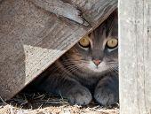 Esconder um gatinho - gato escondido sob madeira passos