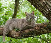 Felino tafetá azul no ramo de árvore