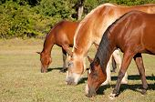 Three horses grazing in pasture on a sunny day