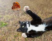 Black and white kitty cat playing with an orange butterfly in flight