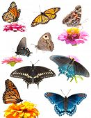 Collage de brillantes y coloridas mariposas en blanco