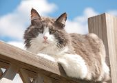 Diluted calico cat resting on railing, looking at the viewer