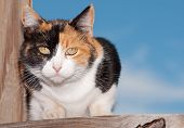 Calico cat on wooden porch, looking intently at the viewer