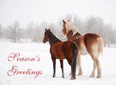 Two frosty horses in fog and snow gazing to distance, with text Seasons greetings