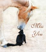 Cat and horse nose to nose with Miss You text