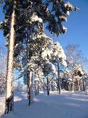 Sunny winter day in Nordic countrie
