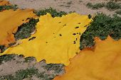 Yellow coloured pieces of skin in Morocco, Fez, Africa