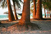 Hammock at Beach between a huge paml trees in Sunset