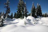 Schnee-Decke