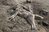 Cão morto